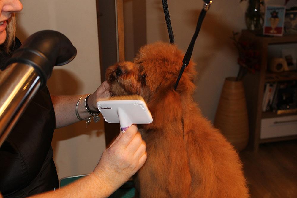 DogGrooming11