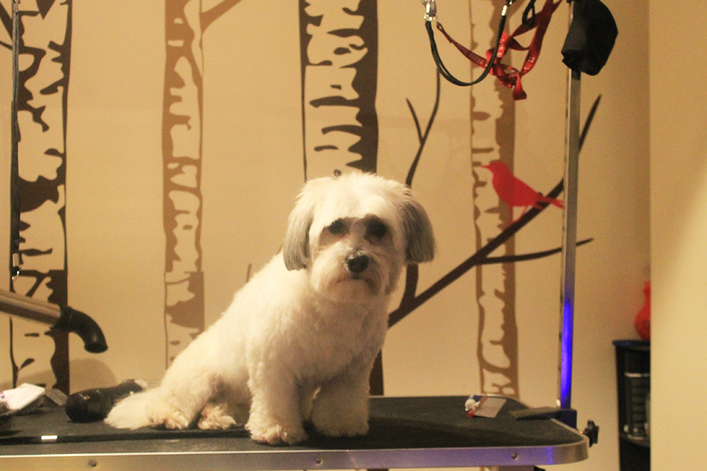 DogGrooming4