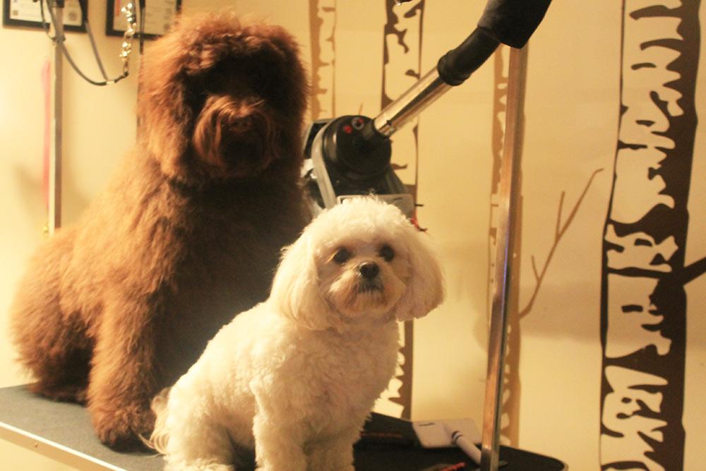 DogGrooming5