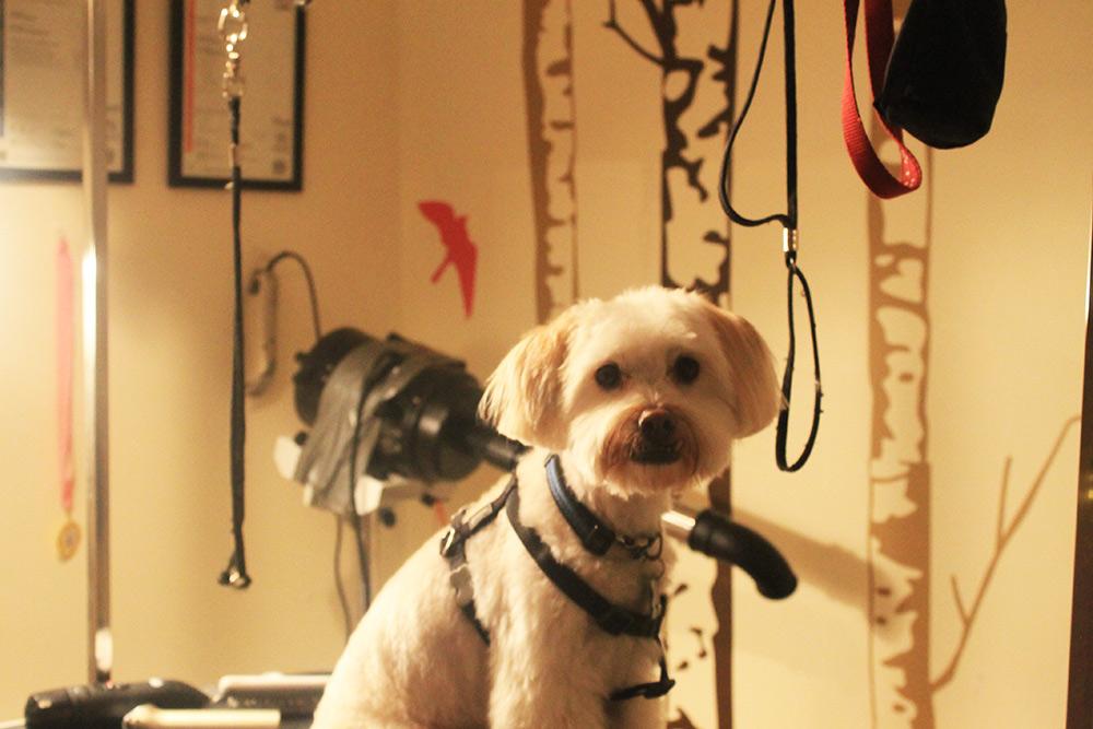 DogGrooming6